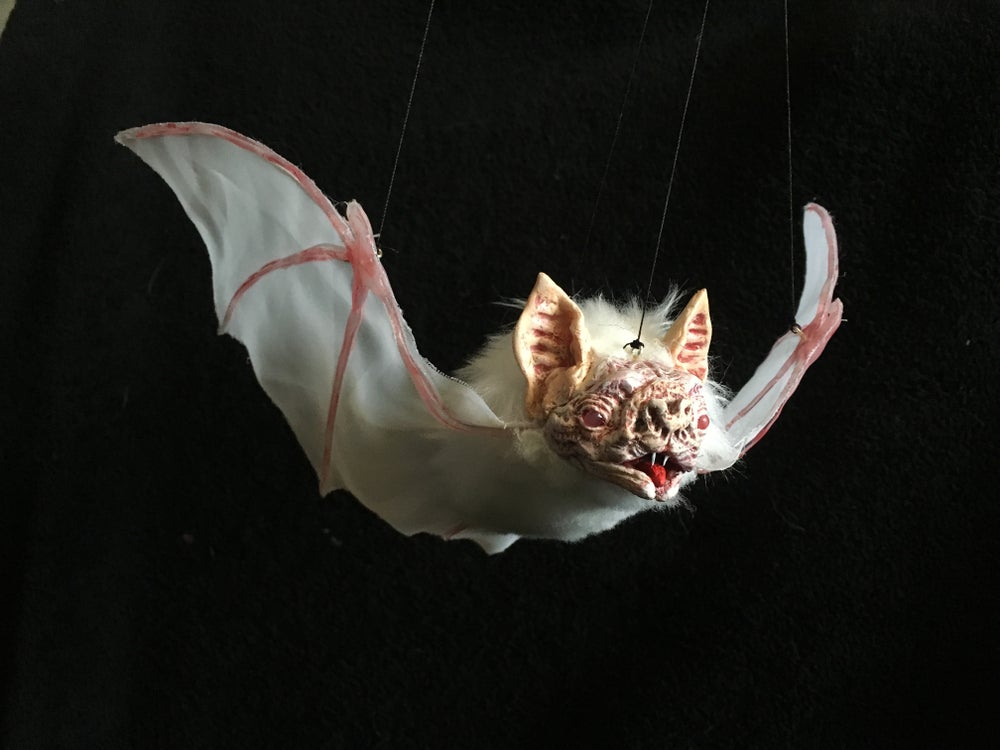 Image of Bat!