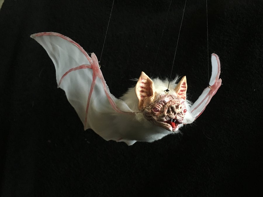 Image of Bat!