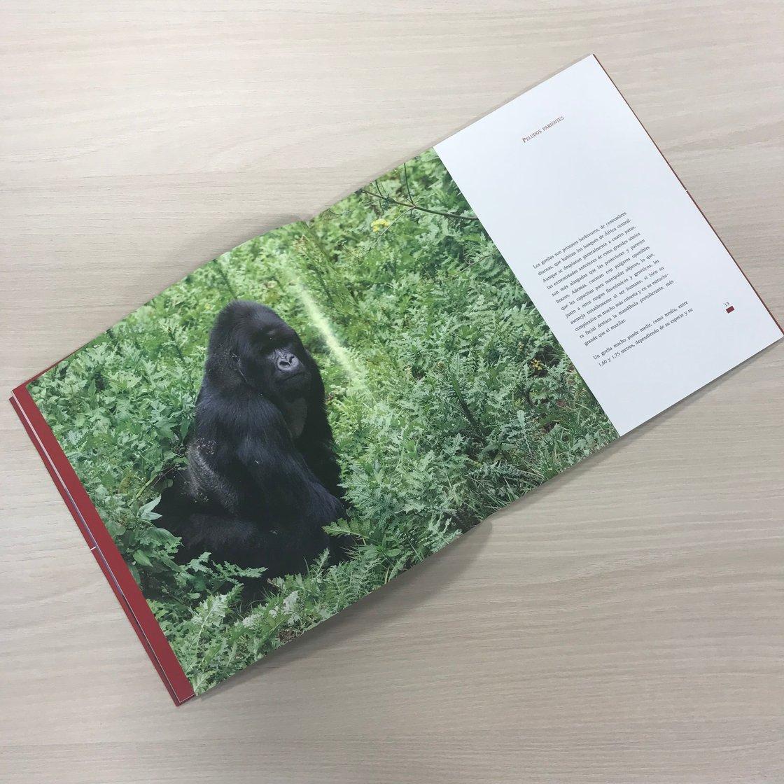 """Image of Libro """"El Gorila de Montaña"""""""