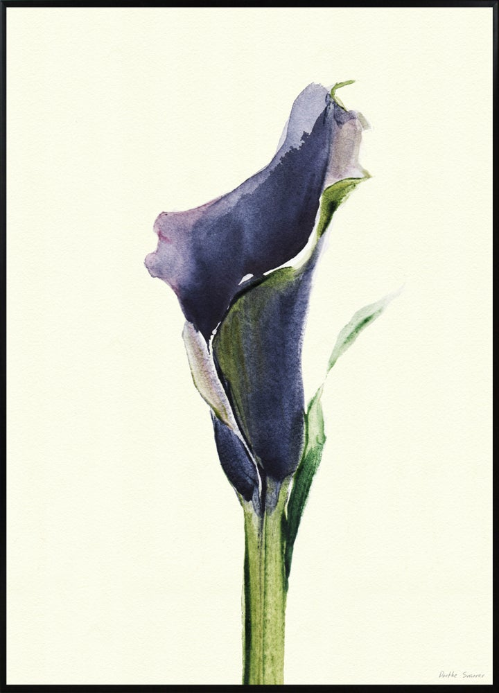 Image of Calla Nero 1 A3 No. 3006