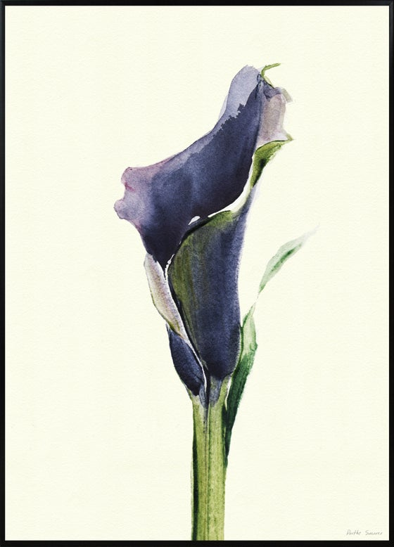 Image of Calla Nero 1 A3 No. 3006