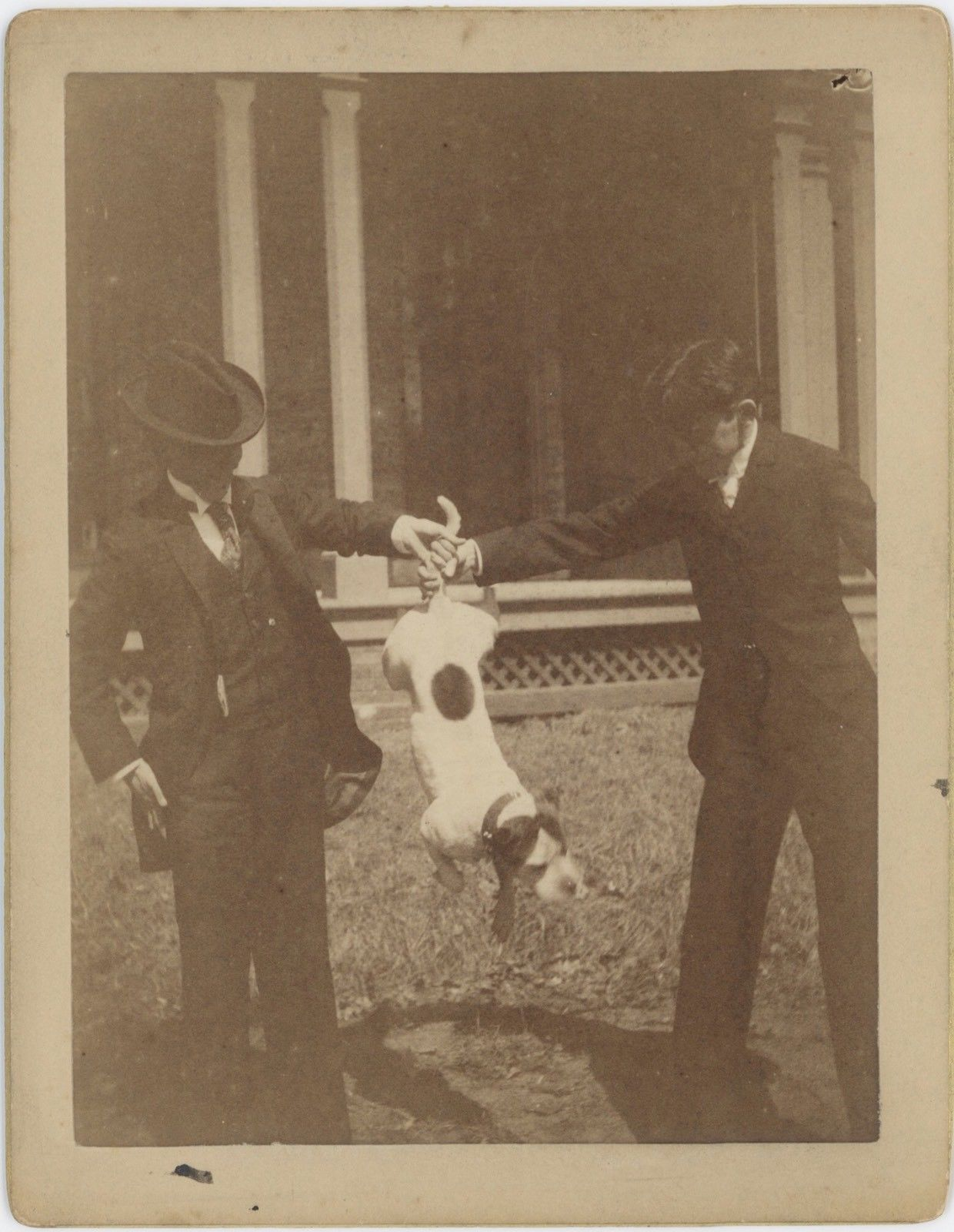 Image of anonymous: two men holding a dog at it's tail, albumen cabinet card