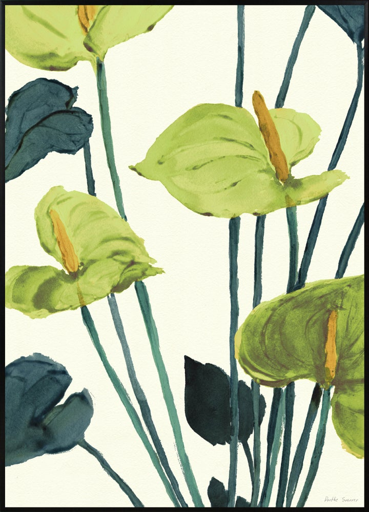 Image of  Anthurium Green A3 No.3001