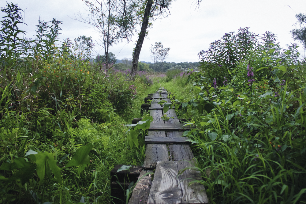 Image of Overgrown Appalachian Trail