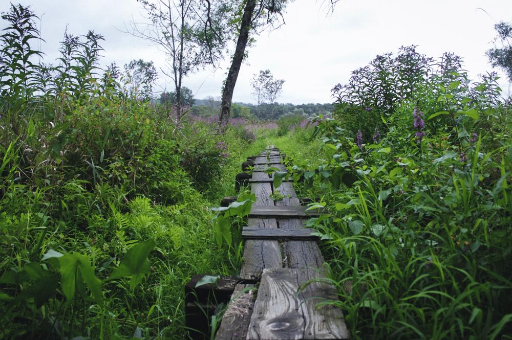 Image of Overgrown Appalachian Trail