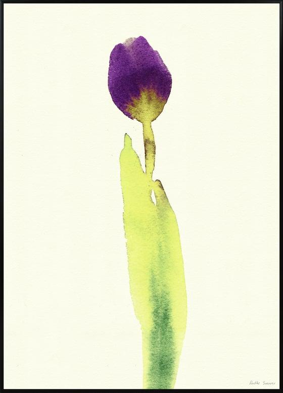 Image of Tulipa Stem A3 No 3016