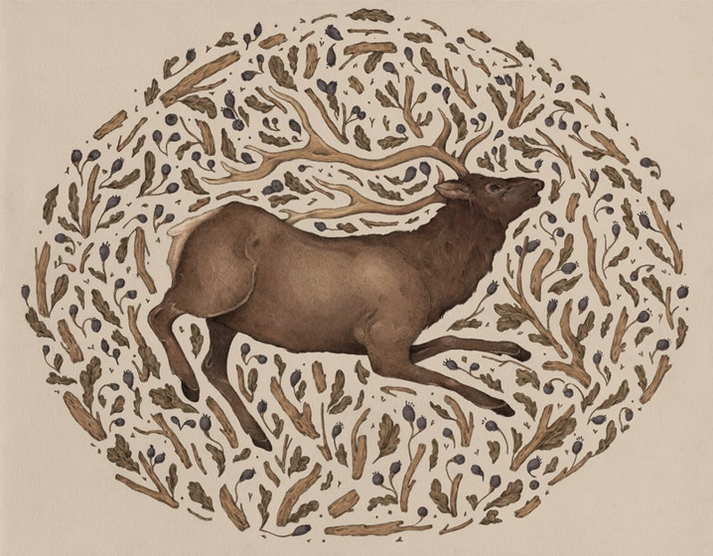 Image of Elk in Nature Print