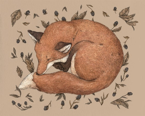 Image of Sleeping Fox Print