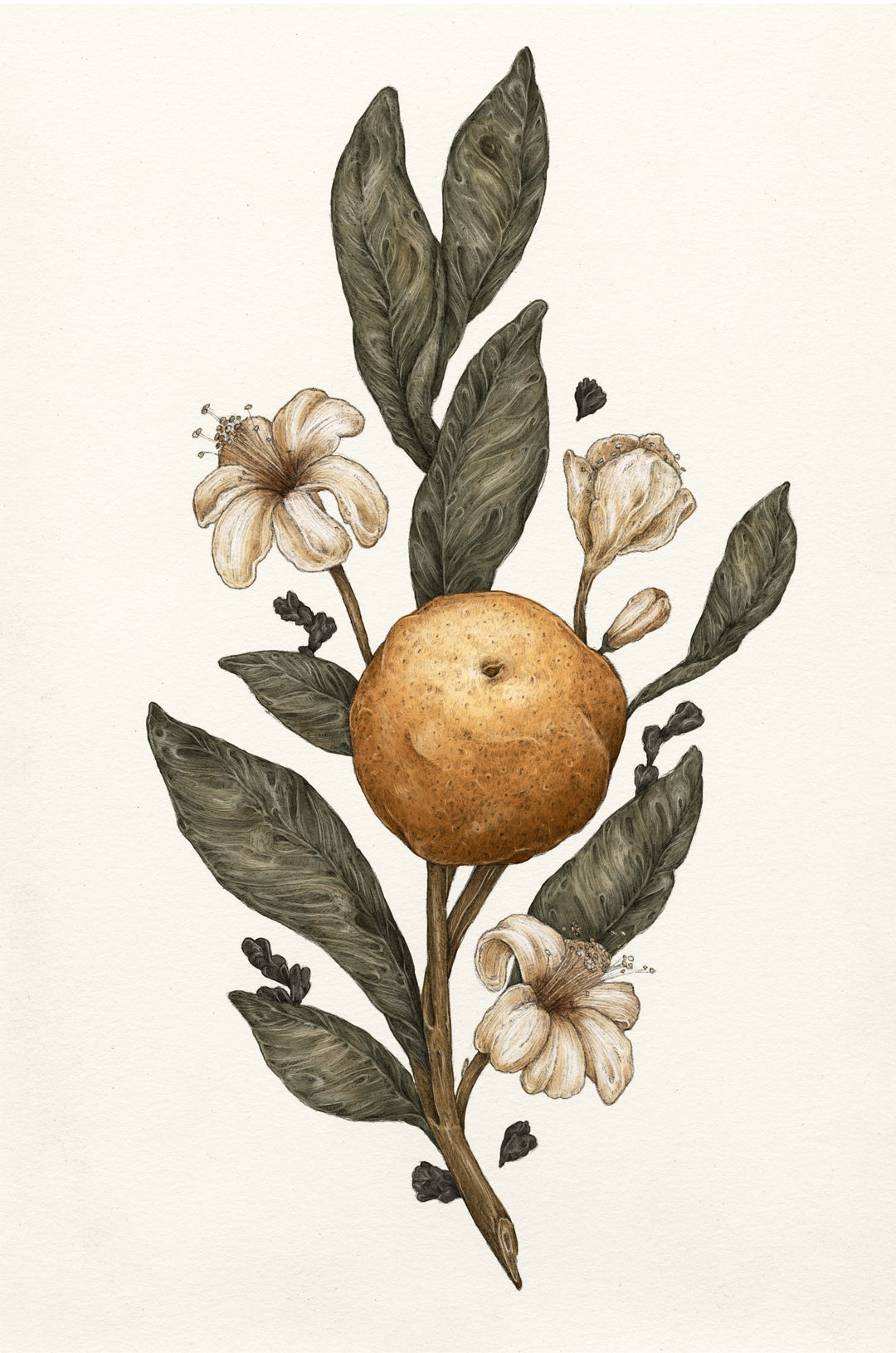Image of Clementine Print