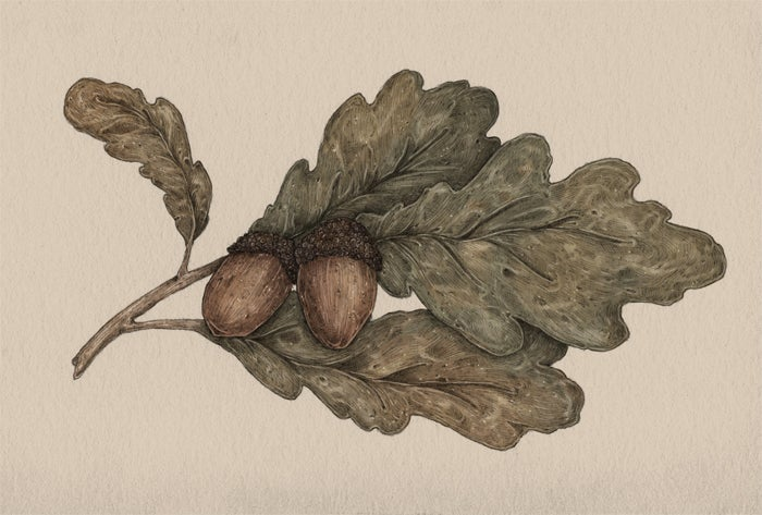 Image of Acorns Print