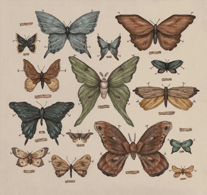 Image of Butterflies and Moths Print