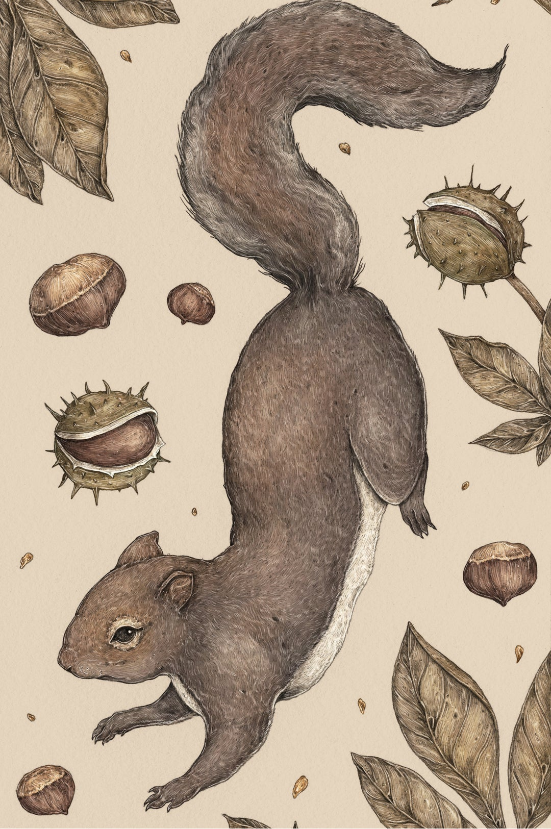 Image of The Squirrel and Chestnuts Print