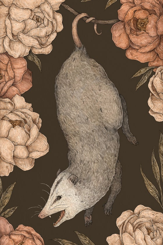 Image of The Possum and Peonies Print