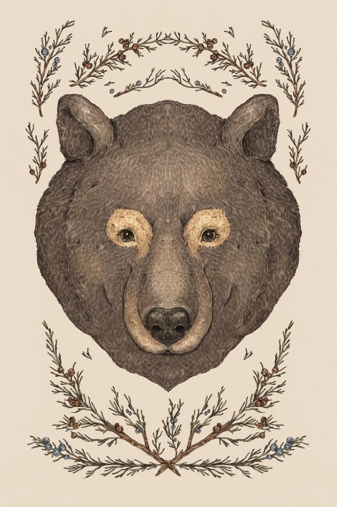 Image of The Bear and Cedar Print