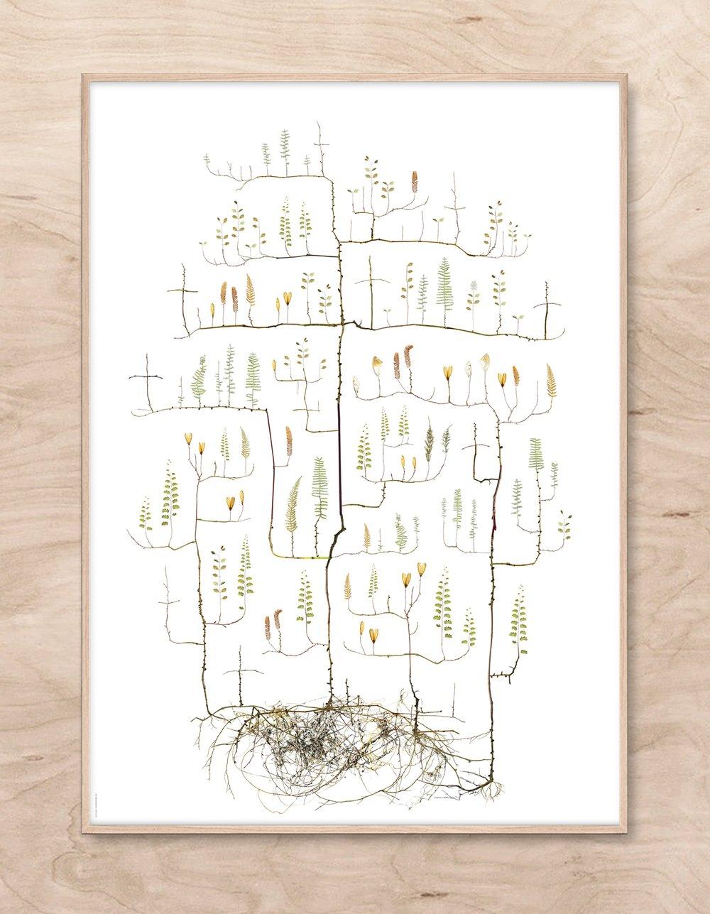 Image of Moth Tree / Malträd