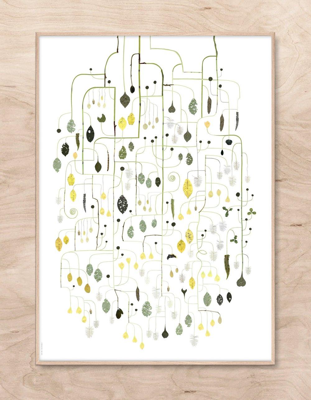 Image of Birdcherry Tree / Häggen