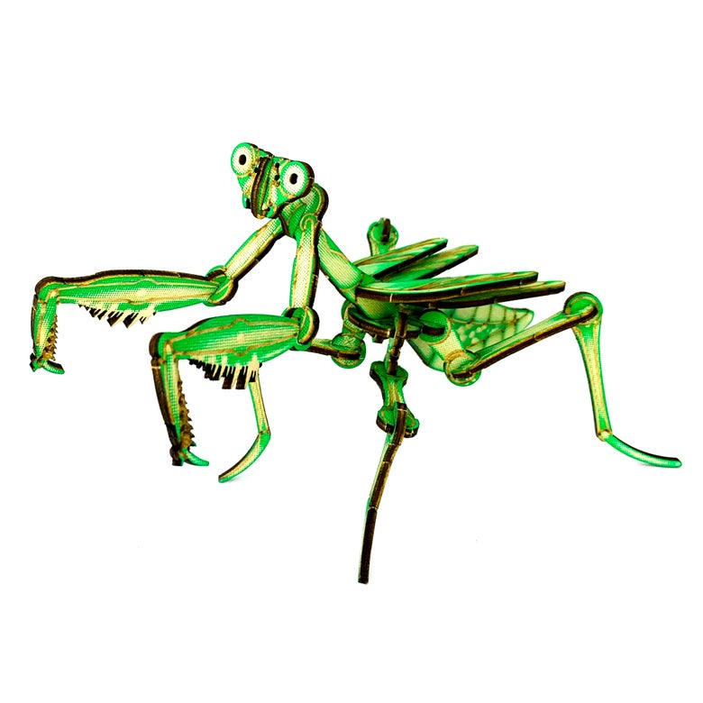 Image of JCR ARTHROPODA : MANTIS