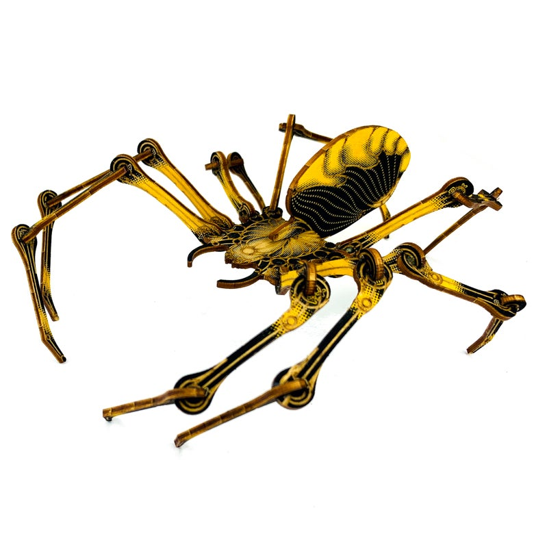 Image of JCR ARTHROPODA : SPIDER