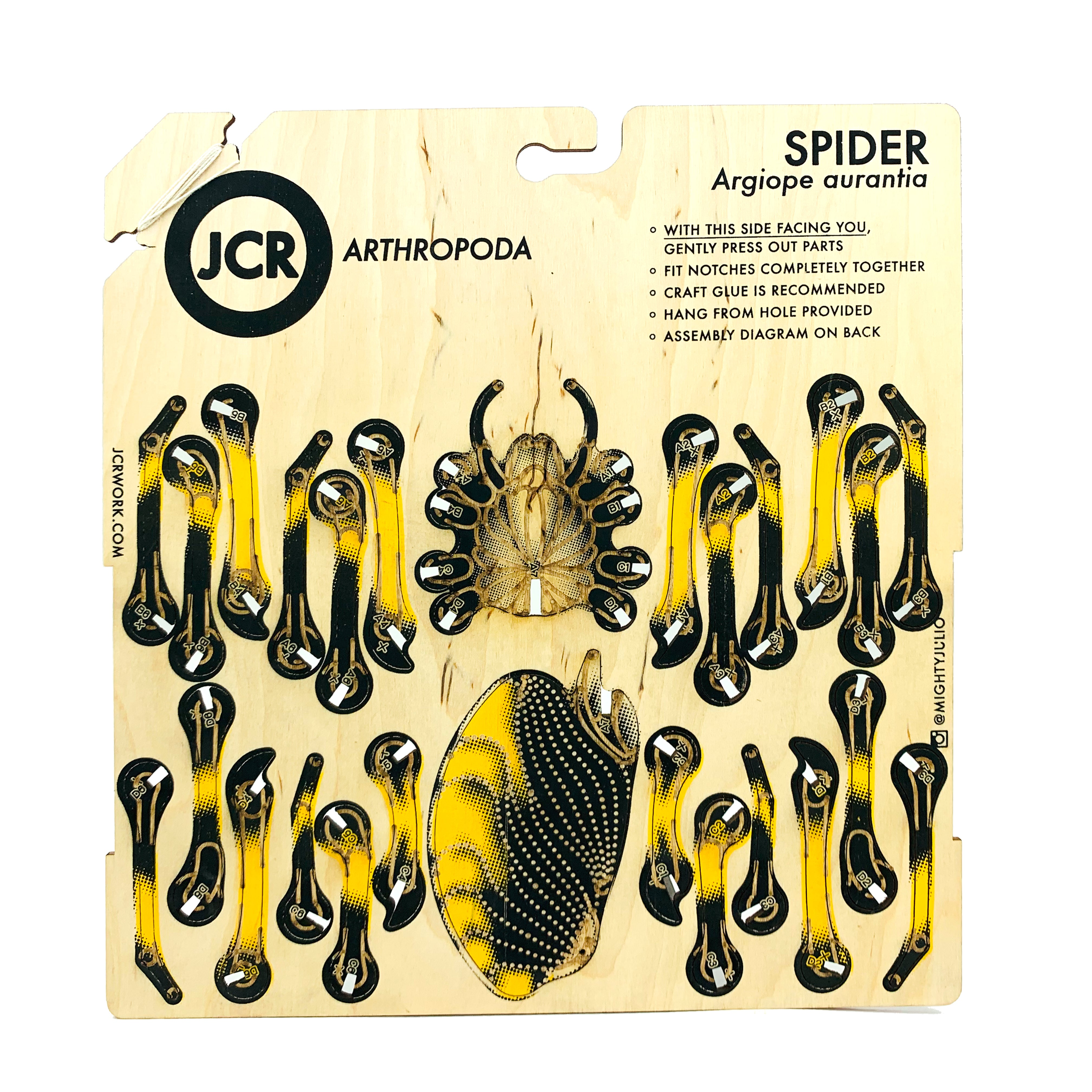 jcr arthropoda spider jcr workshop Arthropoda Grasshopper image of jcr arthropoda spider