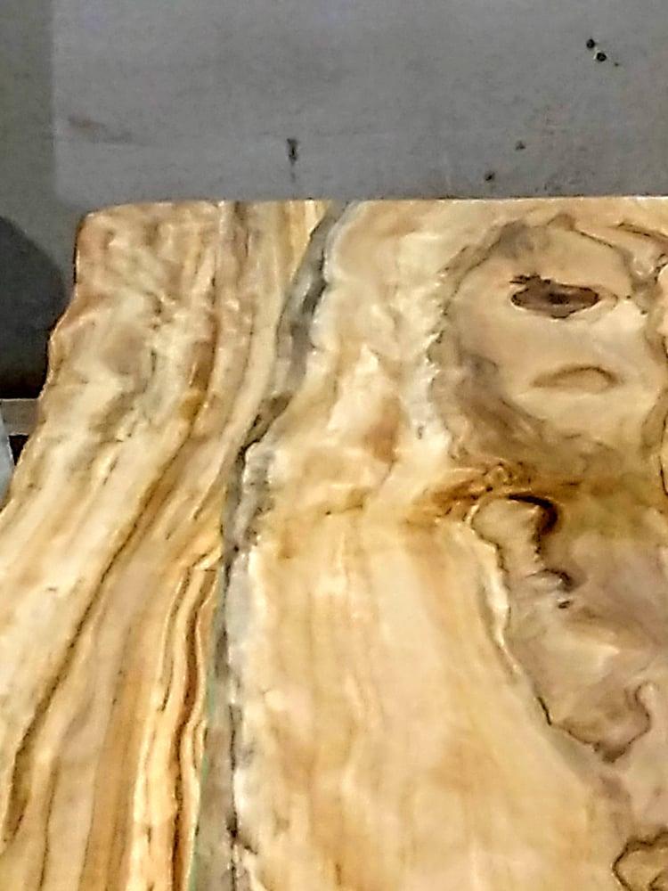 Image of Chinquapin (white) Oak