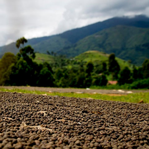 Image of Uganda Rwenzori