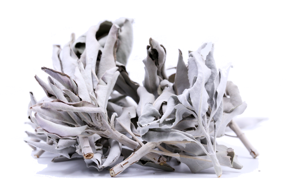Image of White Sage
