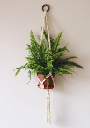 Image of Square Knot Plant Hanger