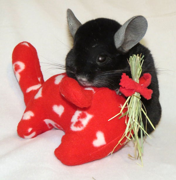 Image of 2019 Special Holiday Chinnie-Buddie--VALENTINE!
