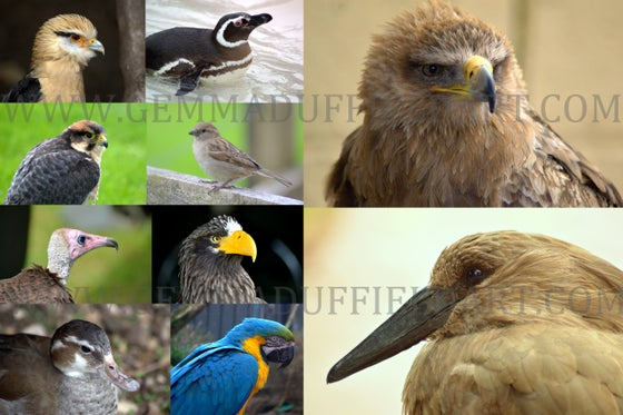 Image of Animal Reference Photos BIRDS