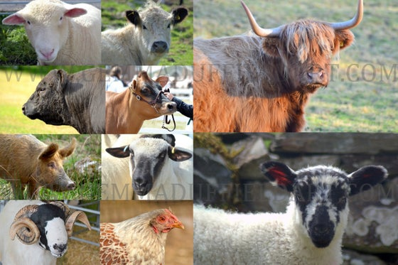 Image of Animal Reference Photos FARM