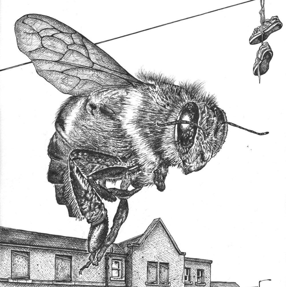 'coV bee'