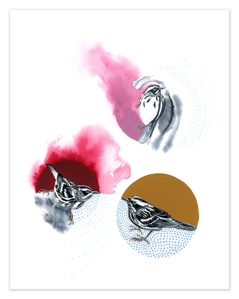 Image of BLACK & WHITE WARBLERS: 11X14 INCH PRINT