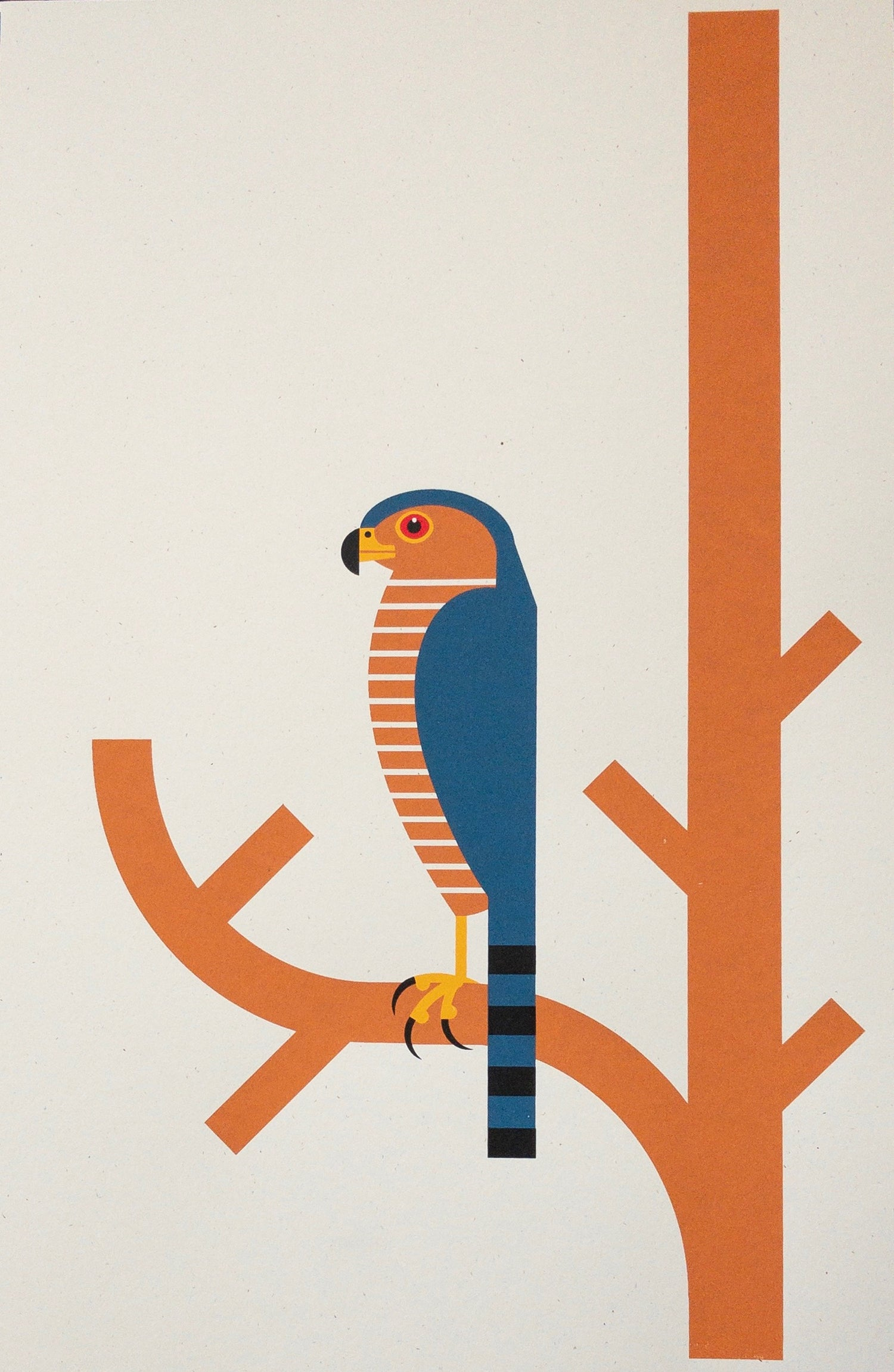 Image of Screenprint - Sharp-shinned Hawk
