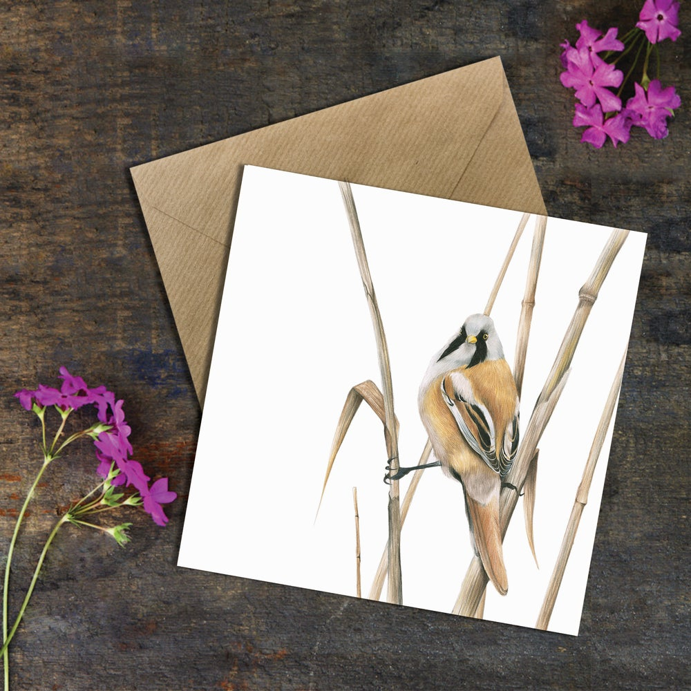 Image of 'Bearded Tit' Greeting Card