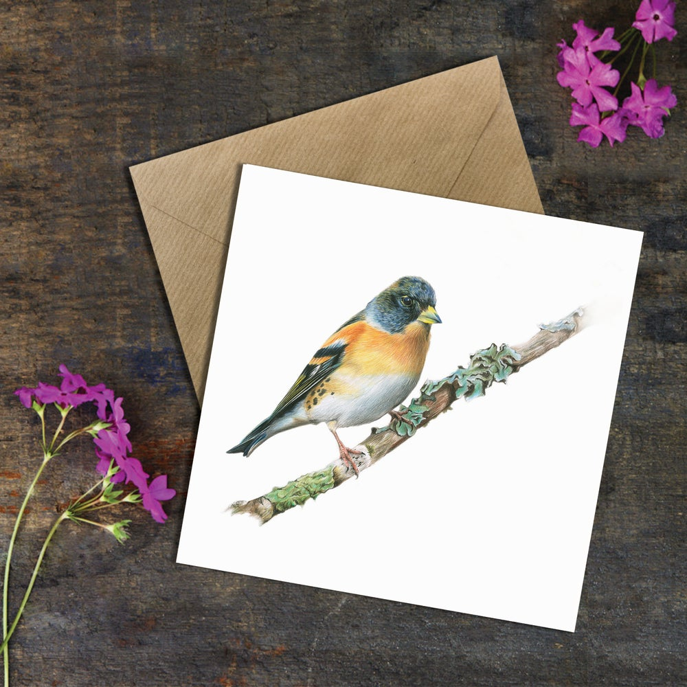 Image of 'Brambling' Greeting Card