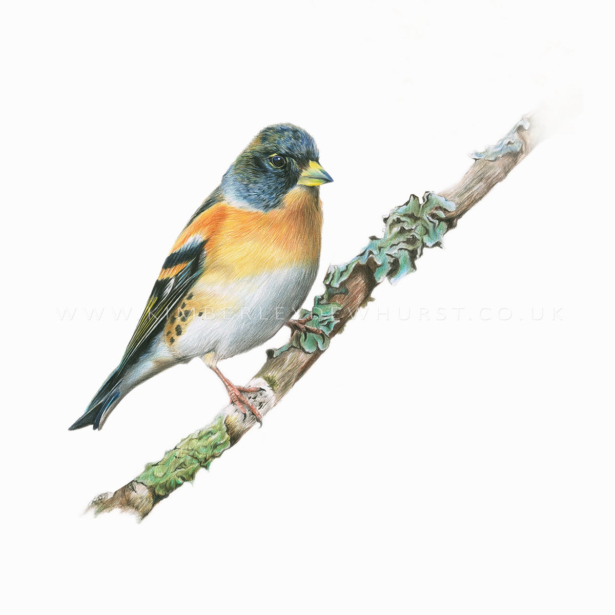 Image of 'BRAMBLING' LIMITED EDITION PRINT