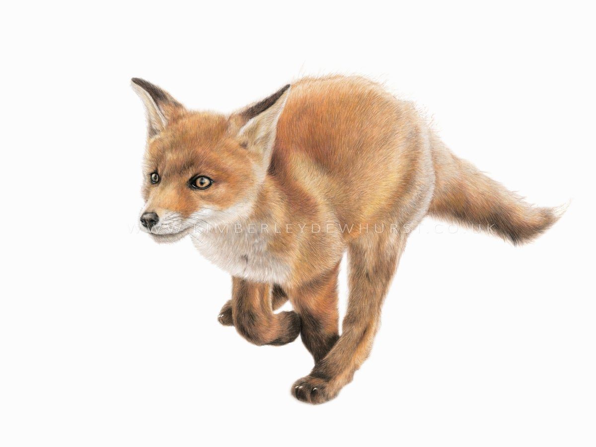 "Image of ""Fox Cub"" Limited Edition Print"