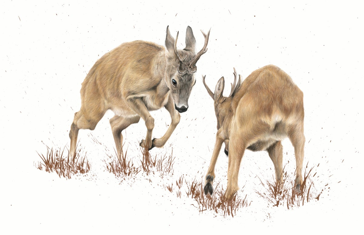 "Image of ""The Roe Rut"" Limited Edition Print"