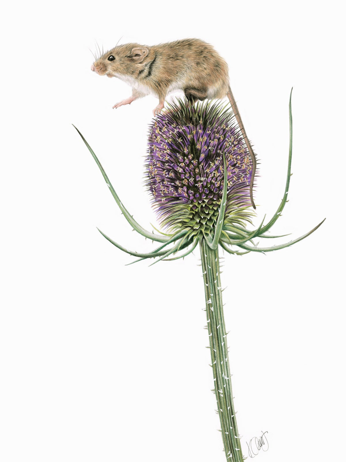 """Image of """"One small step for mice..."""" Limited Edition Print"""