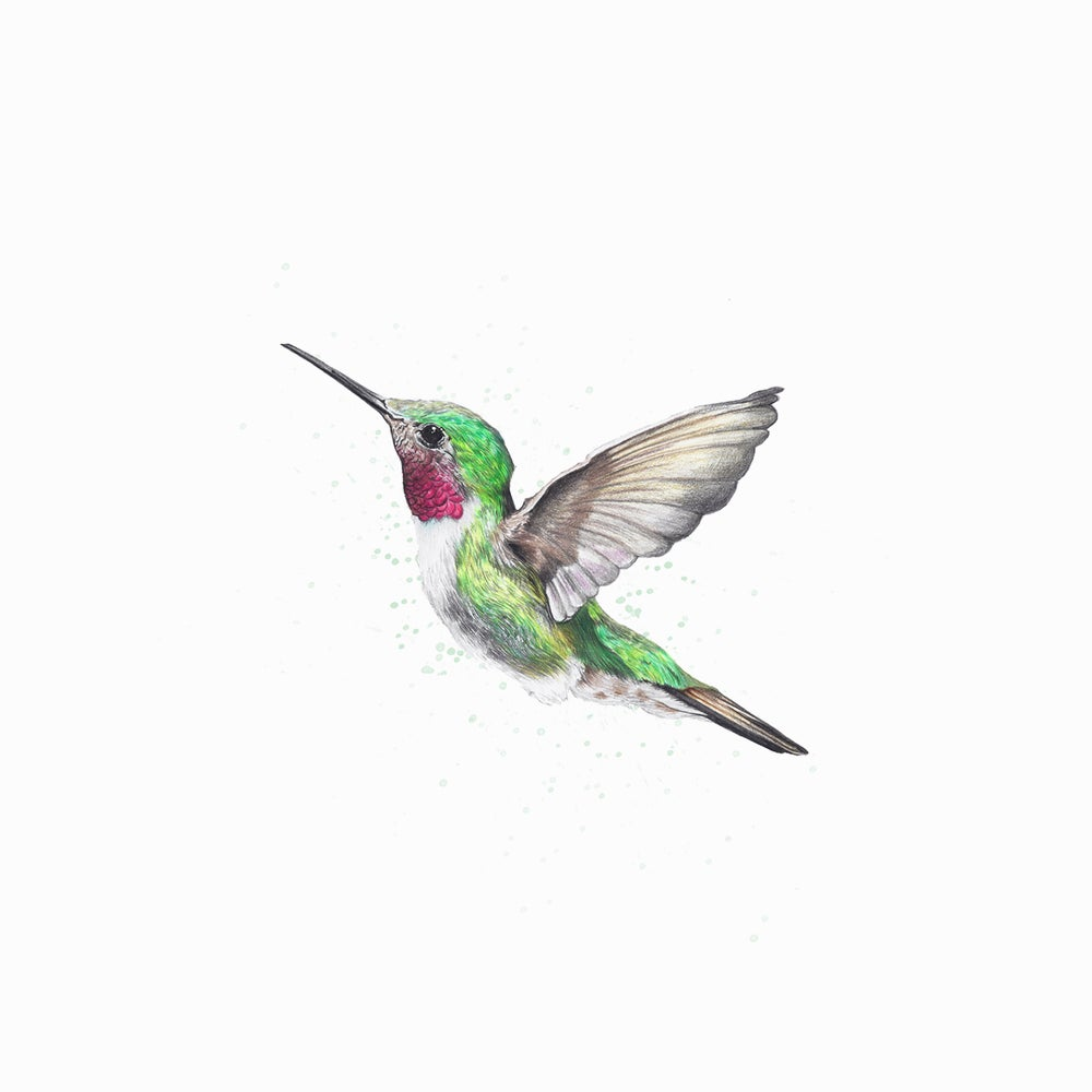 "Image of ""My little hummingbird"" limited edition print"