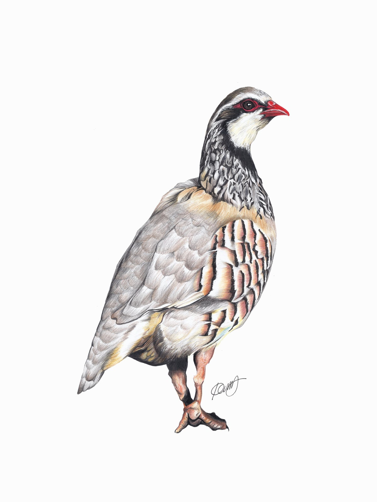 "Image of ""French Partridge"" LIMITED EDITION PRINT"