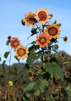 Knit PDF - Sunflowers and Zinnias to Knit and Felt Download