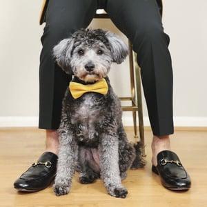 Image of Pet Bow Tie