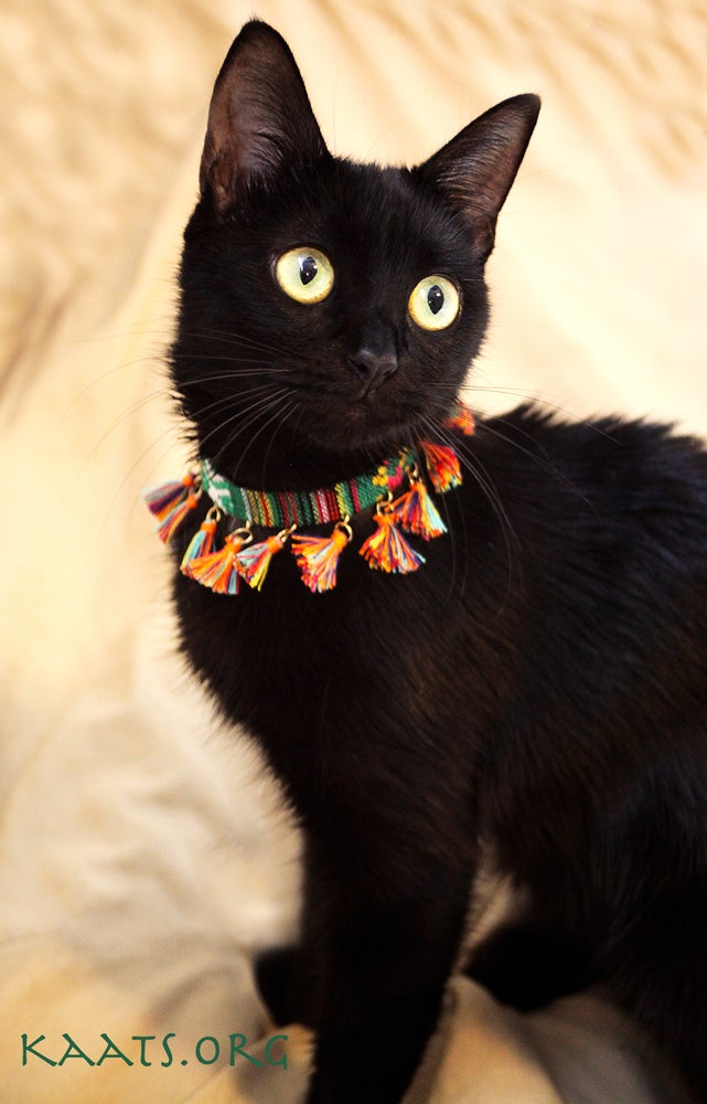 Image of Bright Spectrum Collar