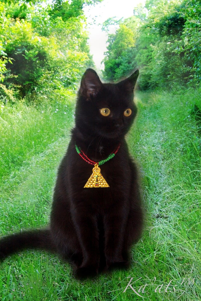 Image of Pyramid Protection Collar