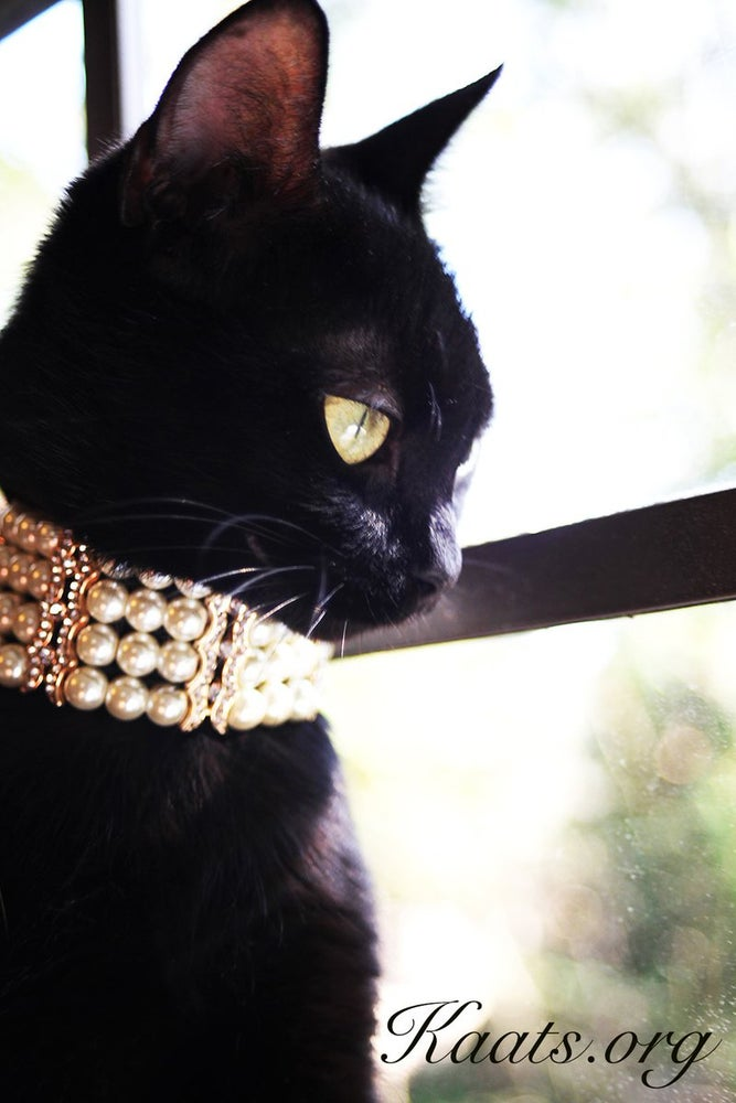 Image of Pure Elegance Collar