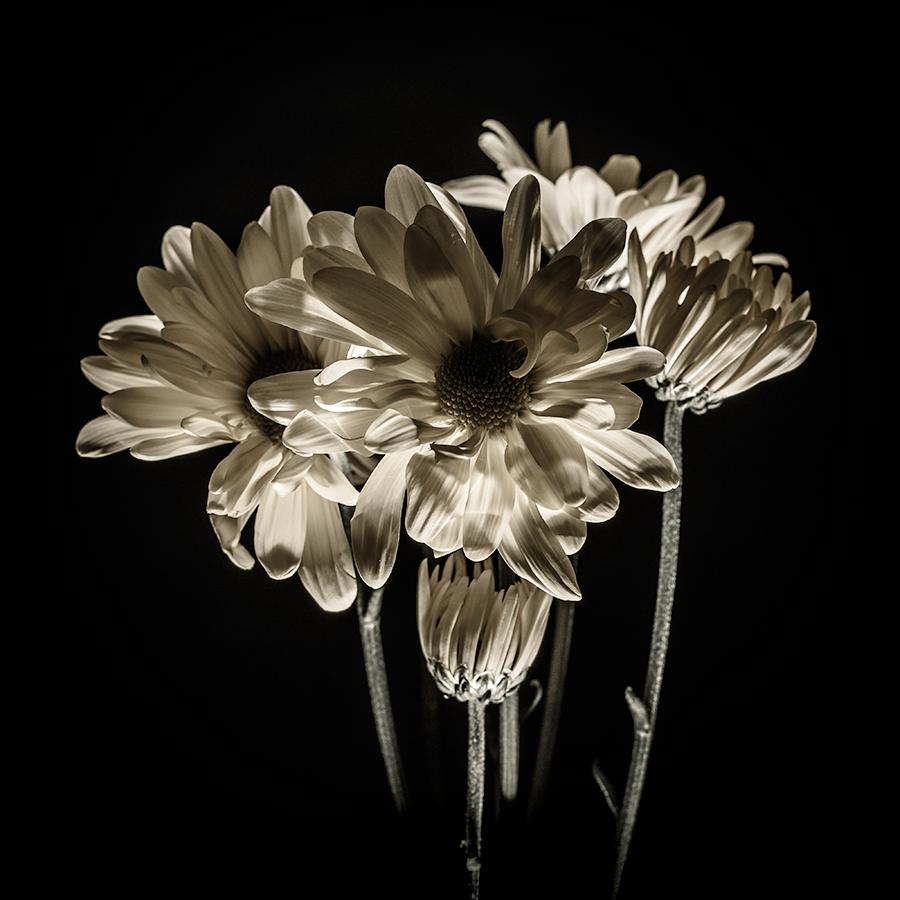 Image of Flortal