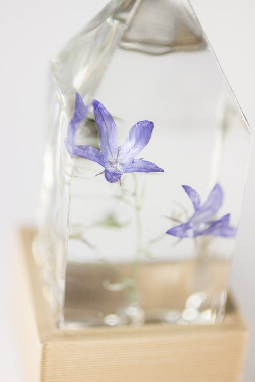 Image of Campanula (Campanula) - Floral Desk Light