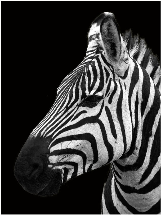 Image of Fotografía: rayas en el Ngorongoro