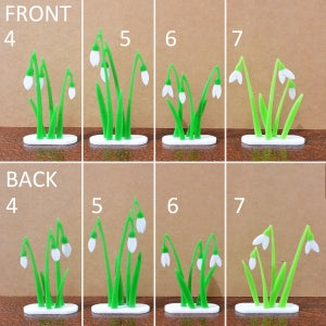 Image of Little Clump of Snowdrops 4 to 7